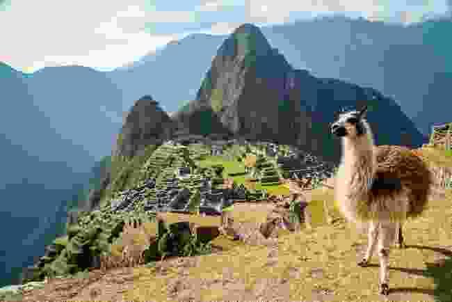 Llama in front of Machu Picchu (Shutterstock)