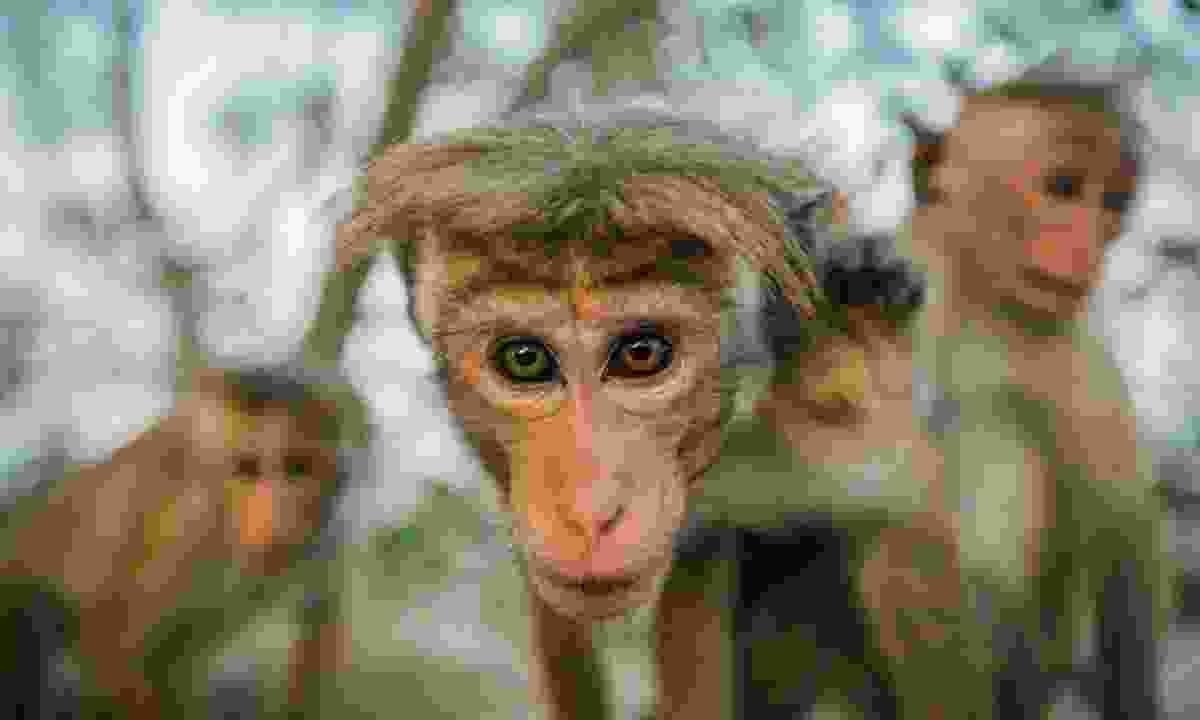 Monkeys in Dambulla (Intrepid Travel)