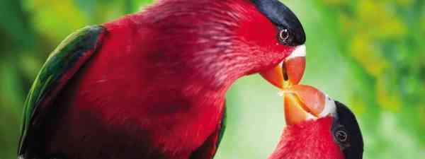 Bird-of-paradise (Brian Coates)