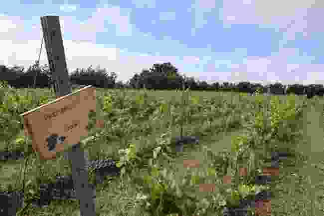Saffron Grange, Saffron Walden, Essex (Sarah Riches)