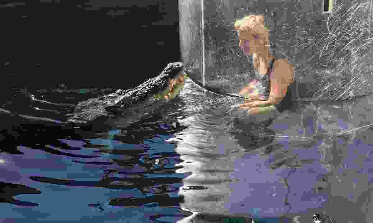 Phoebe coming face to face with William (Crocosaurus Cove)