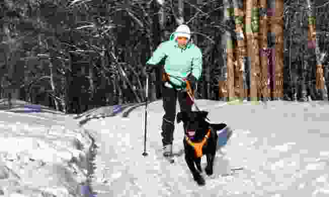 A woman skijoring with her dog (Dreamstime)