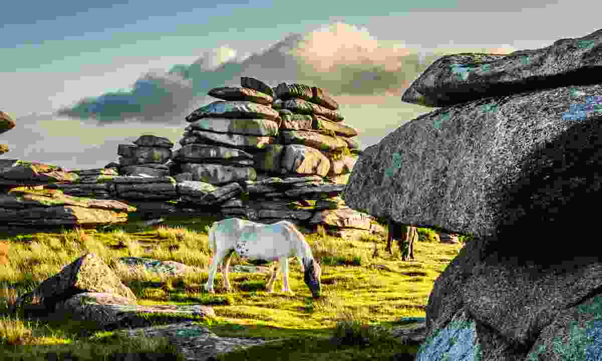 Horse grazing near Rough Tor in Cornwall (Dreamstime)