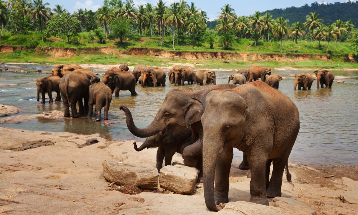7 Sri Lankan wildlife adventures that will change your life