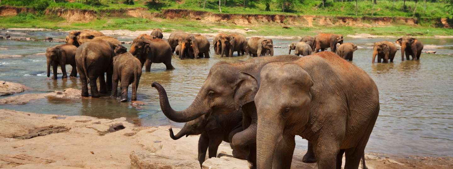 Elephants bathing in Sri Lanka (Dreamstime)