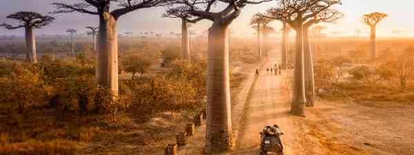 Avenue of the Baobabs in Madagascar (Shutterstock)