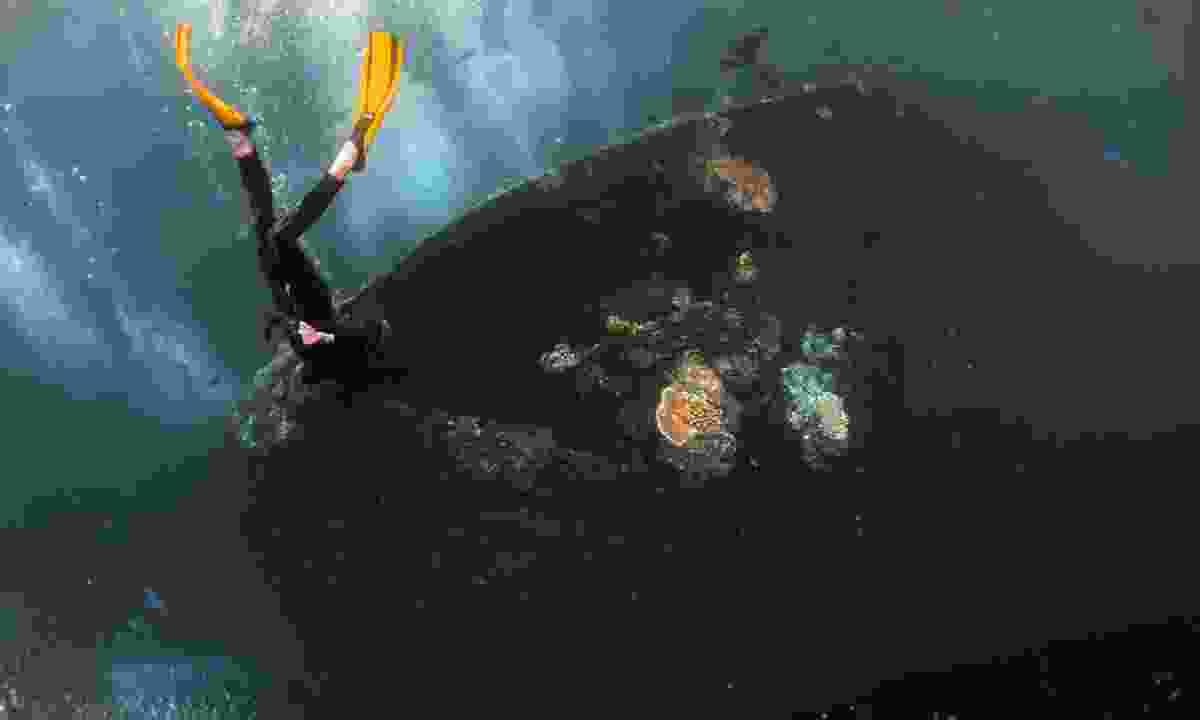 Free diver exploring the U.S.A.T. Liberty shipwreck (Shutterstock)