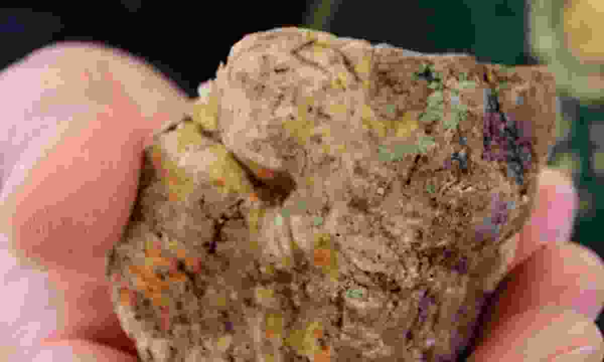 A white truffle (santagatainfiera.com)