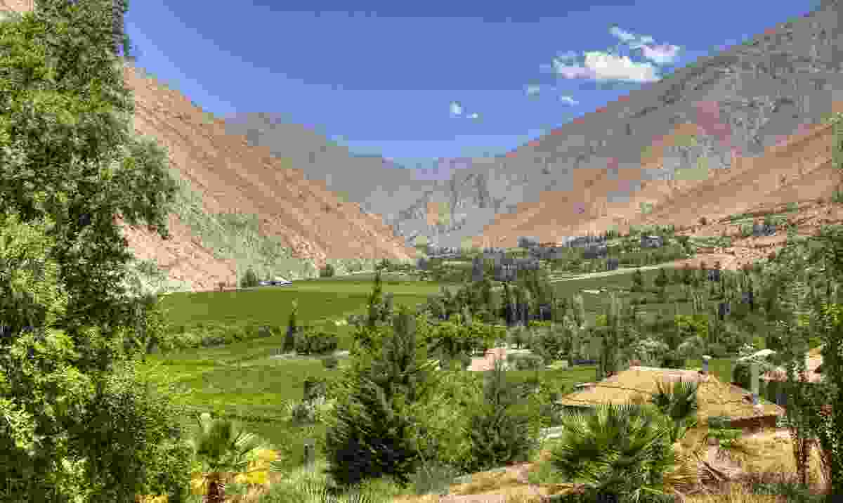 The vineyards of the Elqui Valley (Dreamstime)