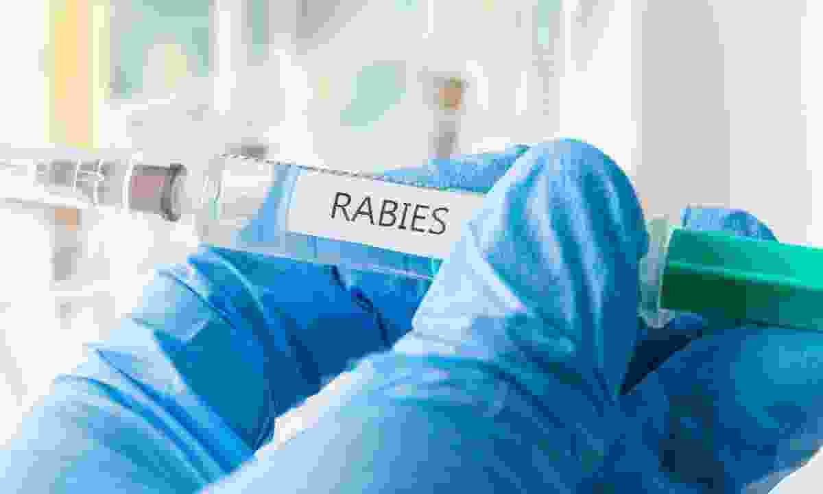 Rabies immunisation is always worth considering (Dreamstime)