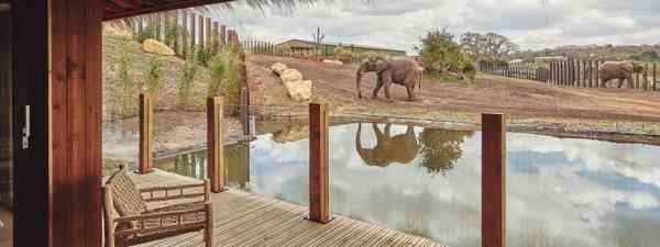 Elephants at West Midland Safari Park (West Midland Safari Park)