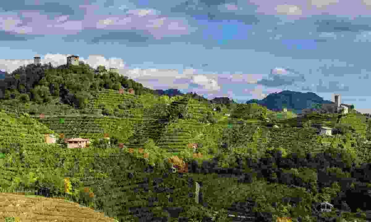 Sip your way through Italy's wine regions (Exodus)