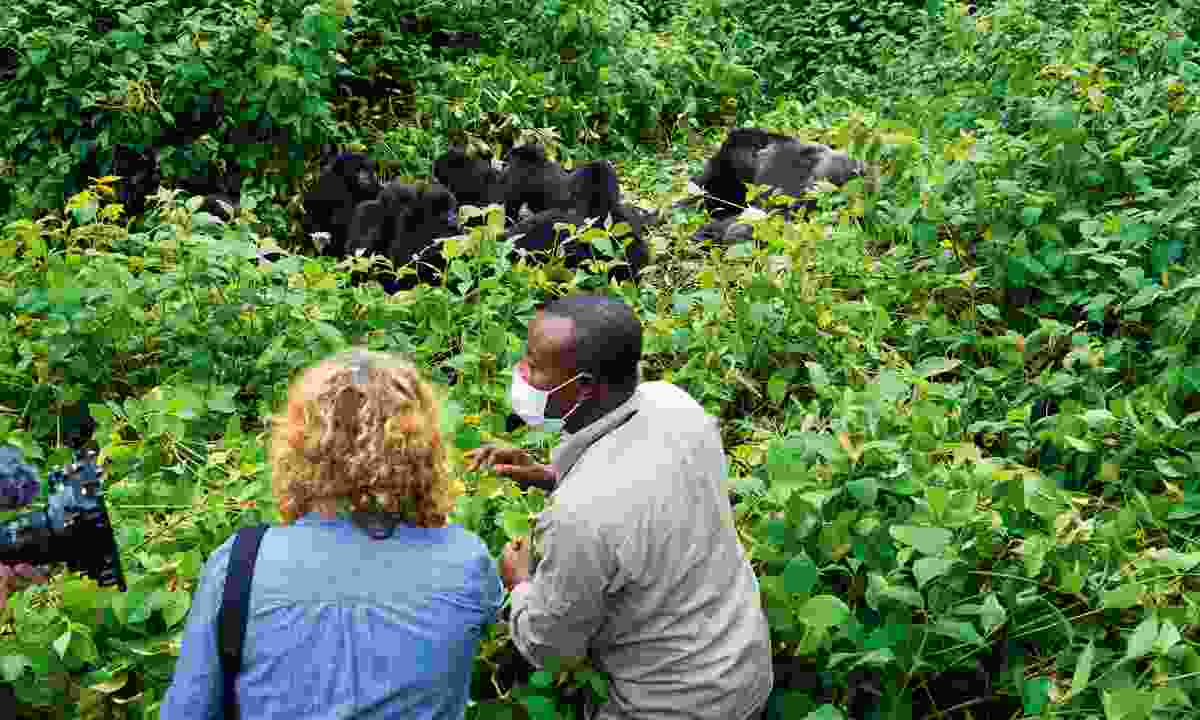 Kate and John crouch in the undergrowth to watch a family of eastern lowland gorillas (Jonny Bealby, Wild Frontiers)