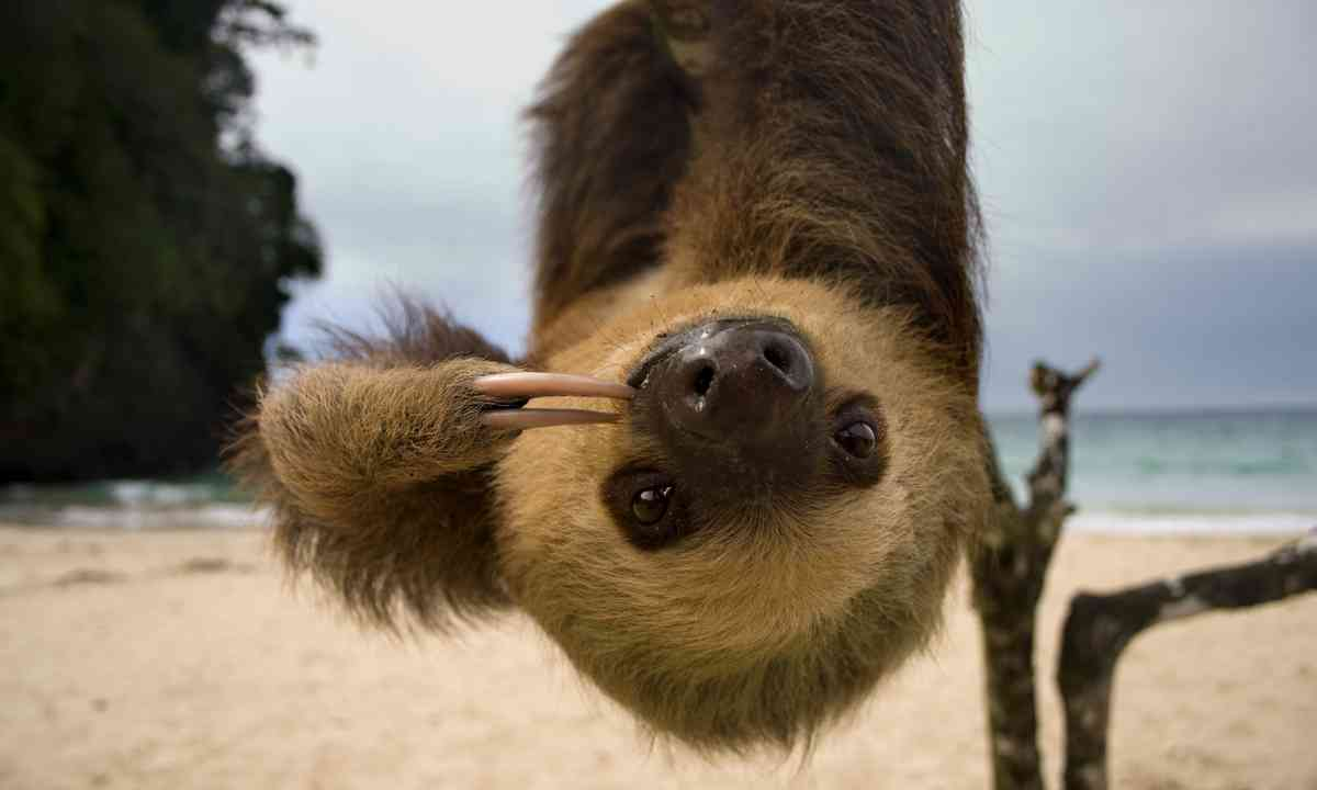 Just hanging around in Costa Rica (Dreamstime)