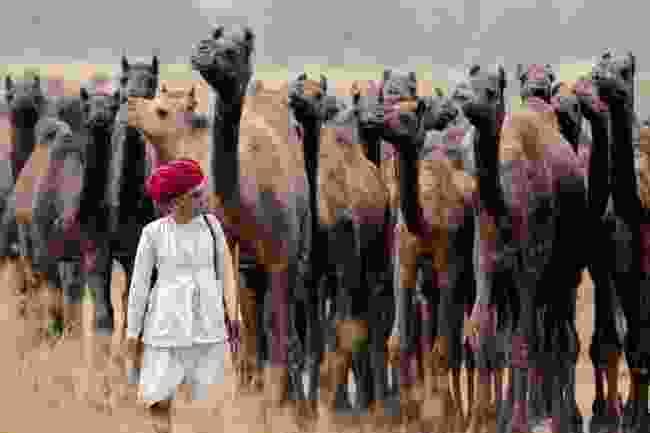 Pushkar Fair, Rajasthan, India (Khairel Anuar Che Ani)