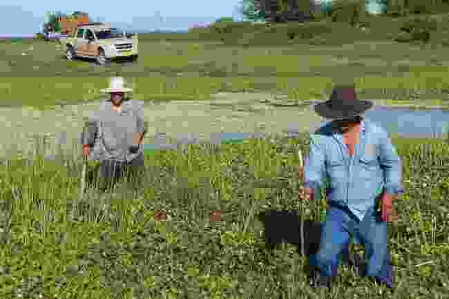 Searching for anacondas in the reeds (Shafik Mehji)