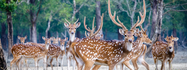8 days in Bangladesh from £715* per person or less