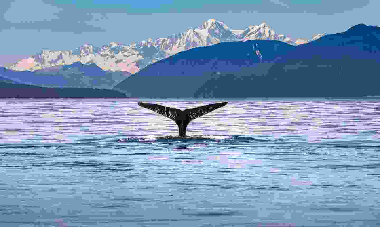 Cruise the Inside Passage, USA and Canada (Shutterstock)