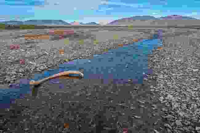 A mammoth bone on Wrangel Island (Shutterstock)
