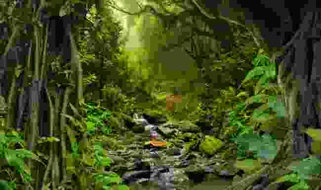 Listen to the sounds of the rainforest (Shutterstock)