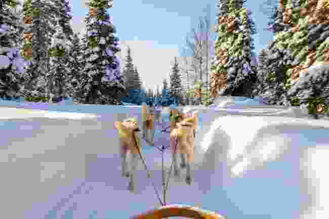 Sleigh rides (Shutterstock)