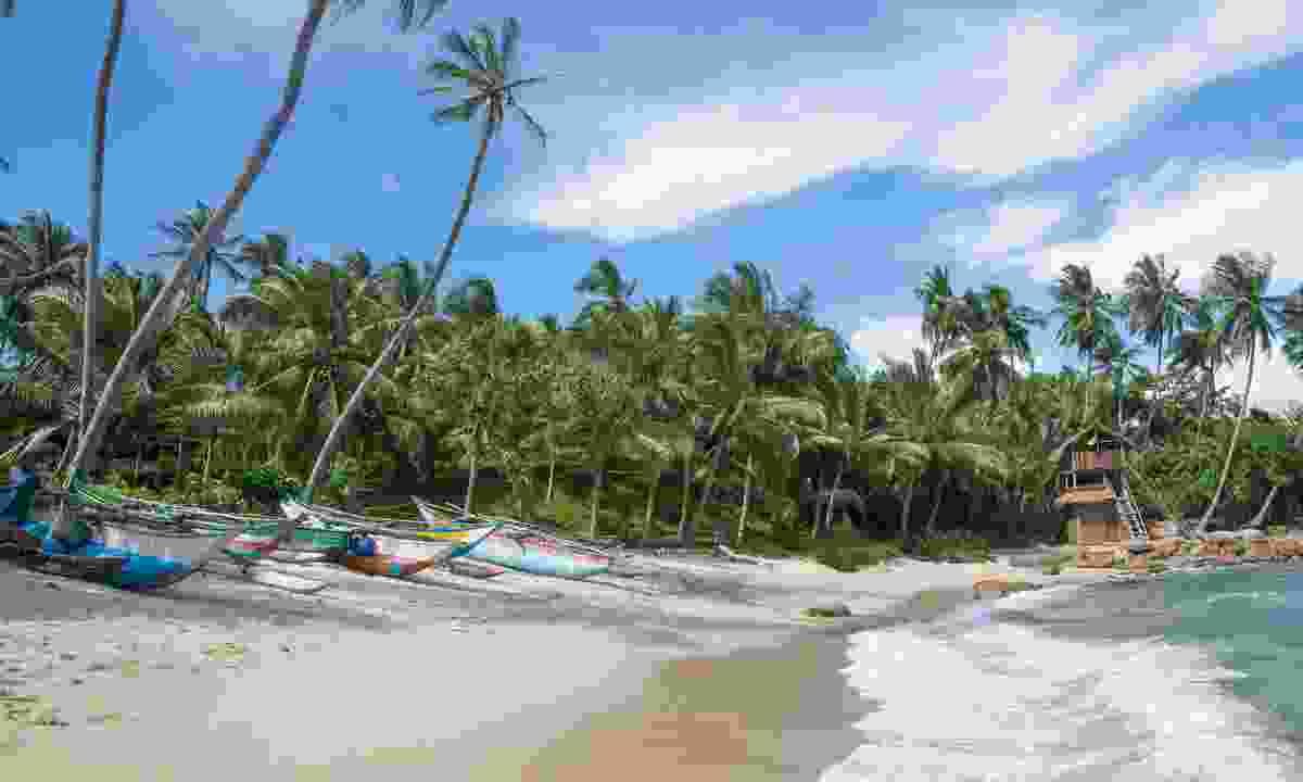 Sand and palms on the south coast of Sri Lanka (Dreamstime)
