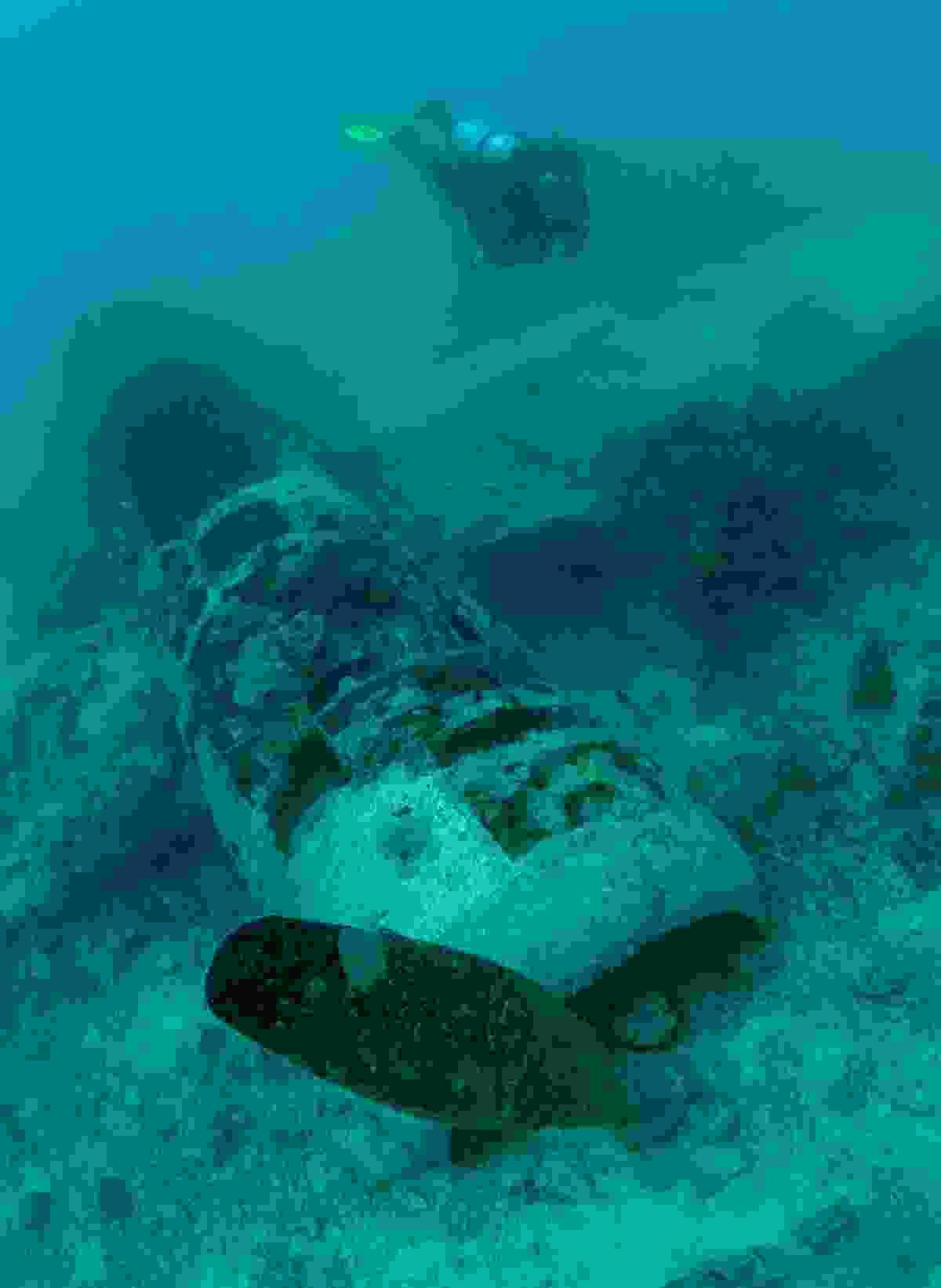 Japanese shipwreck (PNGTPA)