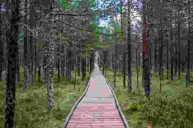 A bog boardwalk in Estonia (Alari Teede)