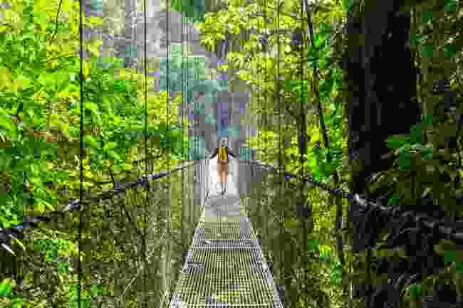 A rainforest in Costa Rica (Shutterstock)
