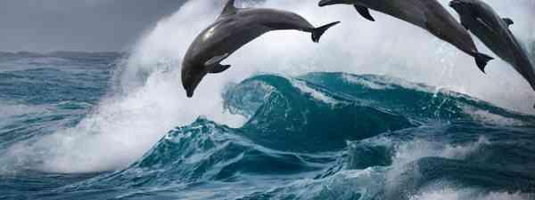 Bottlenose dolphins (Shutterstock)