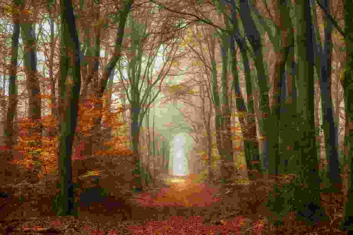 Classic Woods, Speulder Forest, Netherlands (Lars Van de Goor)