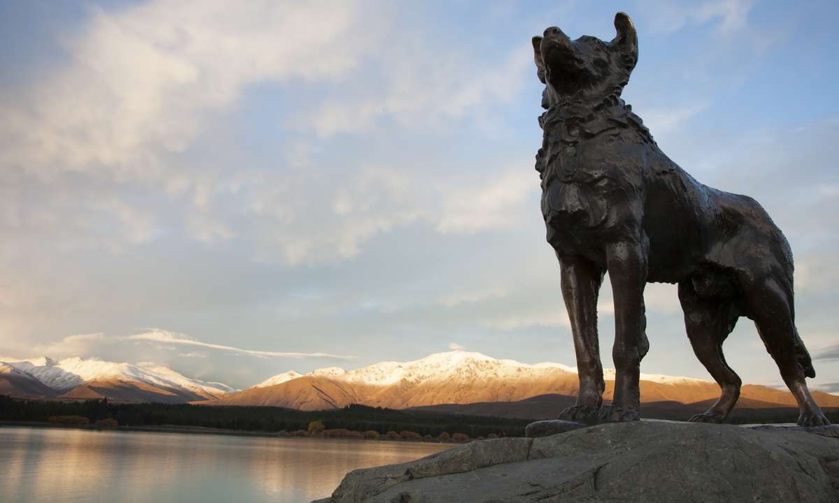Collie statue at sunset (Dreamstime)