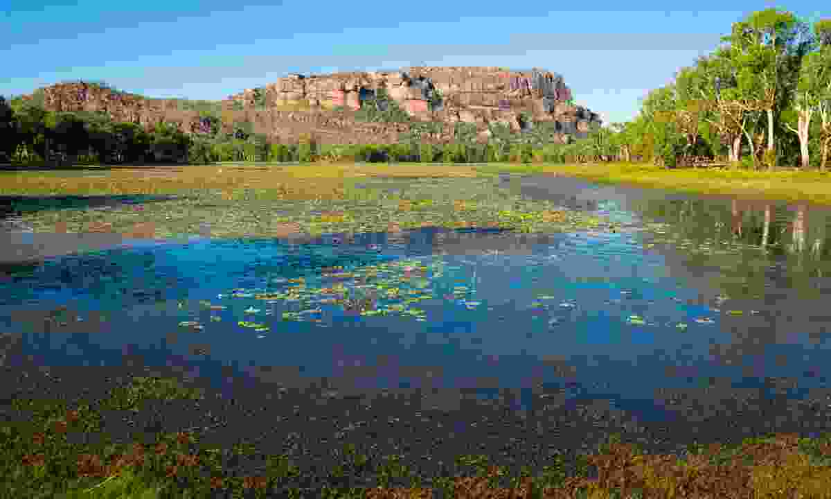 Anbangbang Billabong, Kakadu National Park (Dreamstime)