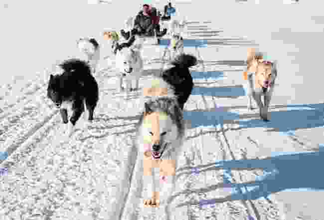 Dog sledding time... (Shutterstock)