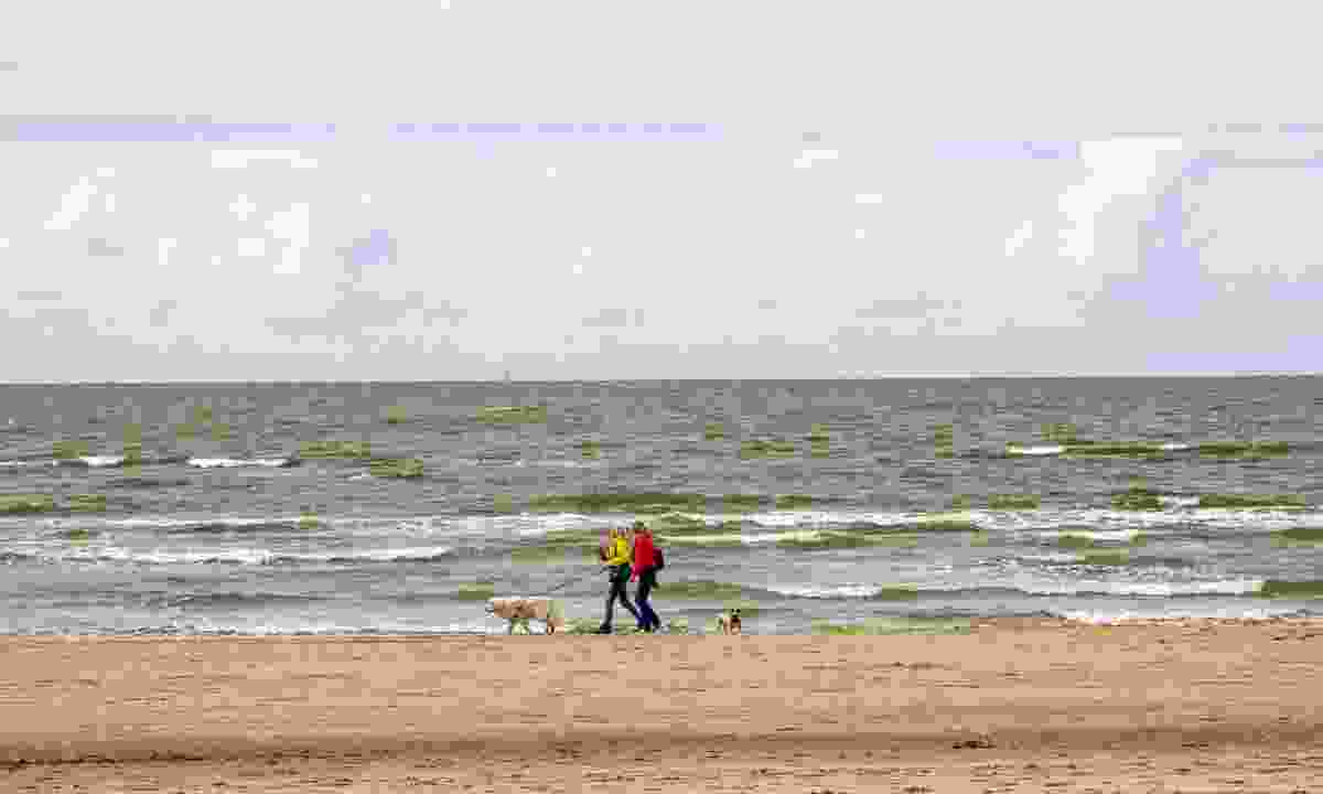 Walking with dogs along Noordwijk beach in The Netherlands (Dreamstime)
