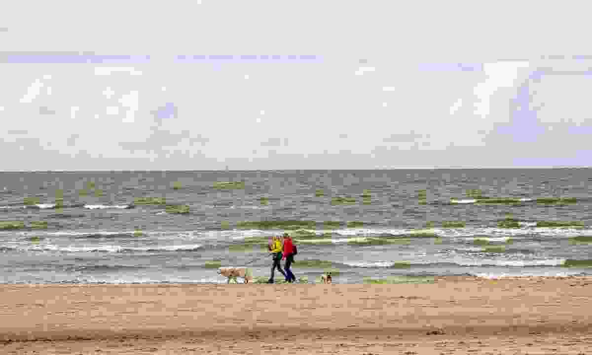 Walking with dogs along Noordwijk beach in The Netherlands (Dreamstime)