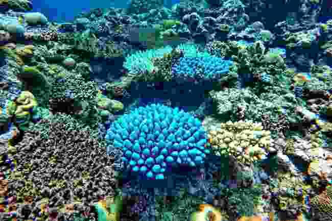 Snorkel among coral in Fiji (Shutterstock)