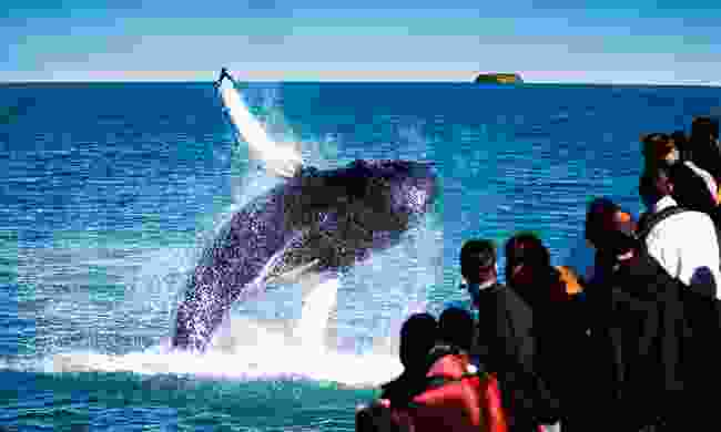 Watch whales in Iceland (Discover the World)