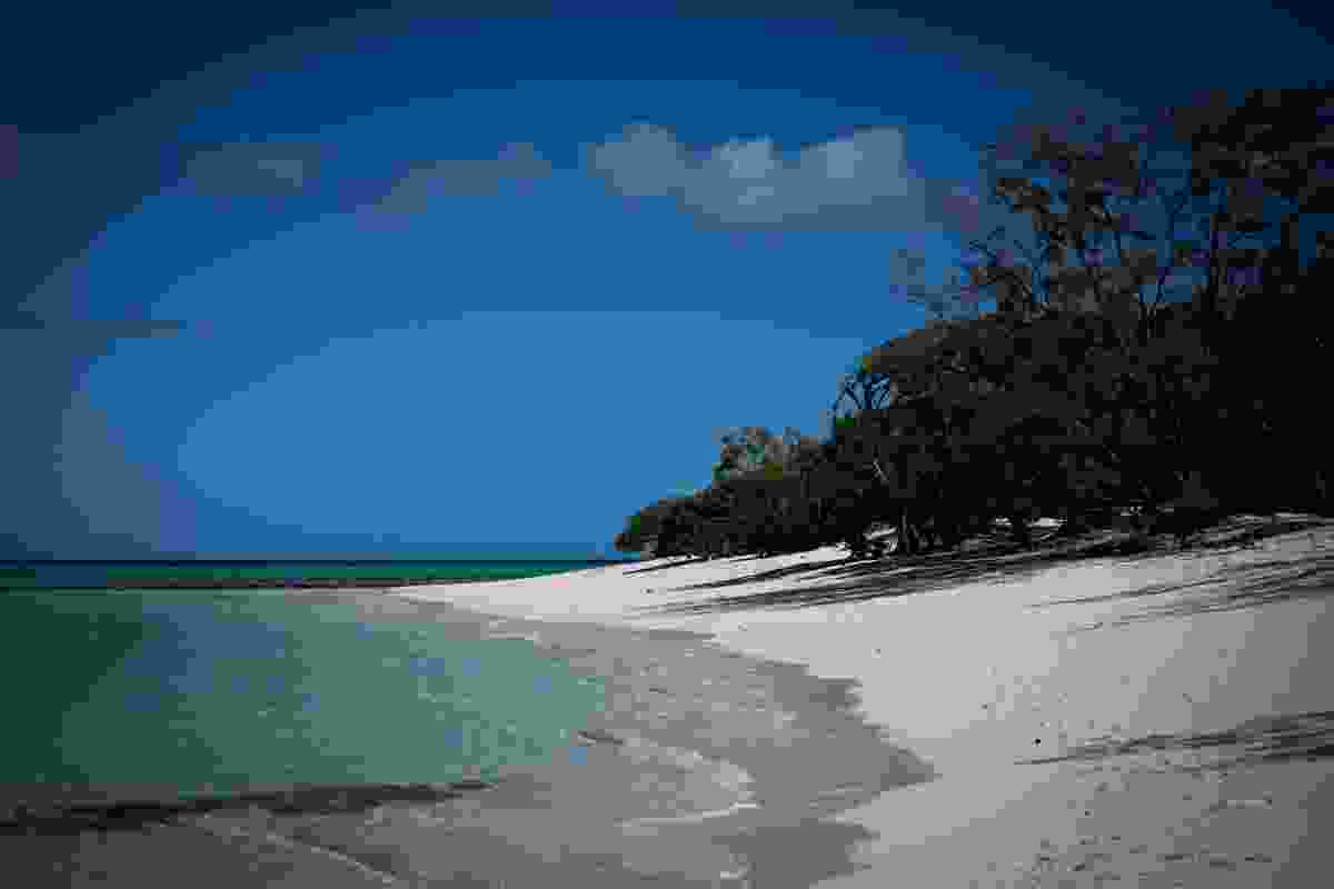 Heron Island's sandy beaches (Phoebe Smith)
