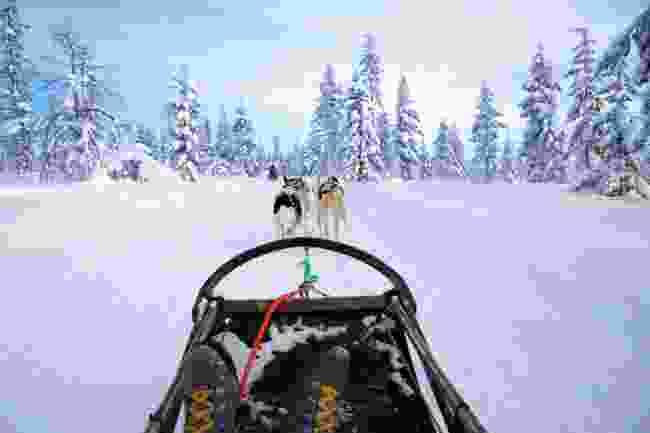 Dog sledding with huskies in Arctic Sweden (Shutterstock)