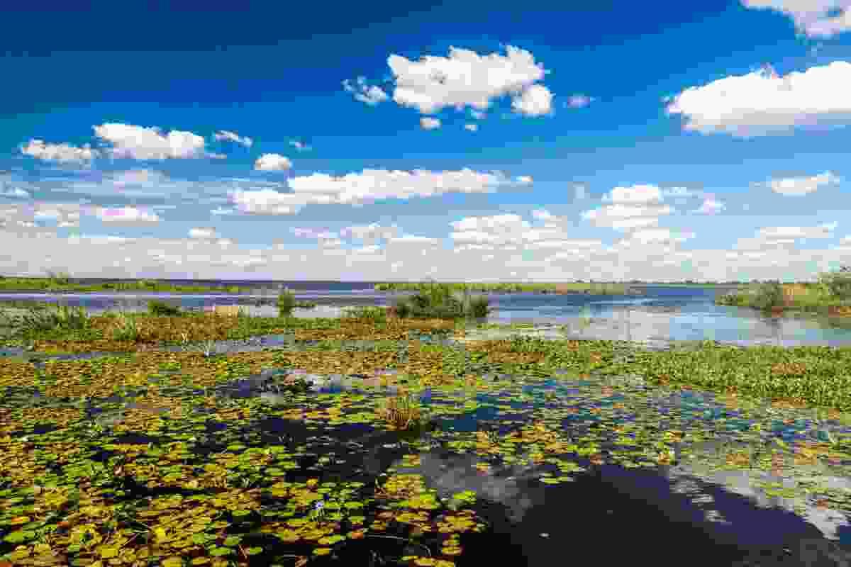 Wetlands in Ibera, Argentina (Shutterstock)
