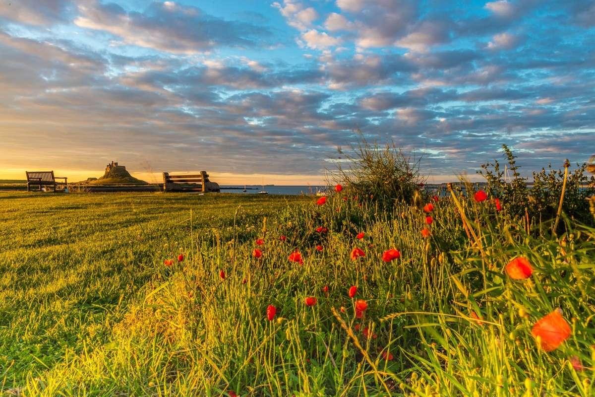 Colourful landscapes on Lindisfarne (Chris Orange)
