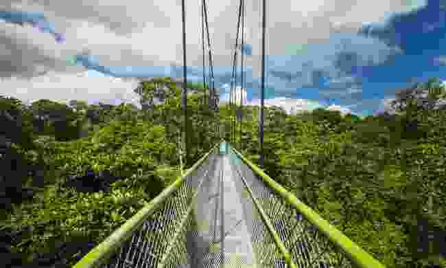 The free-standing suspension bridge at MacRitchie Reservoir Park is a great way to get above the wildlife (Shutterstock)