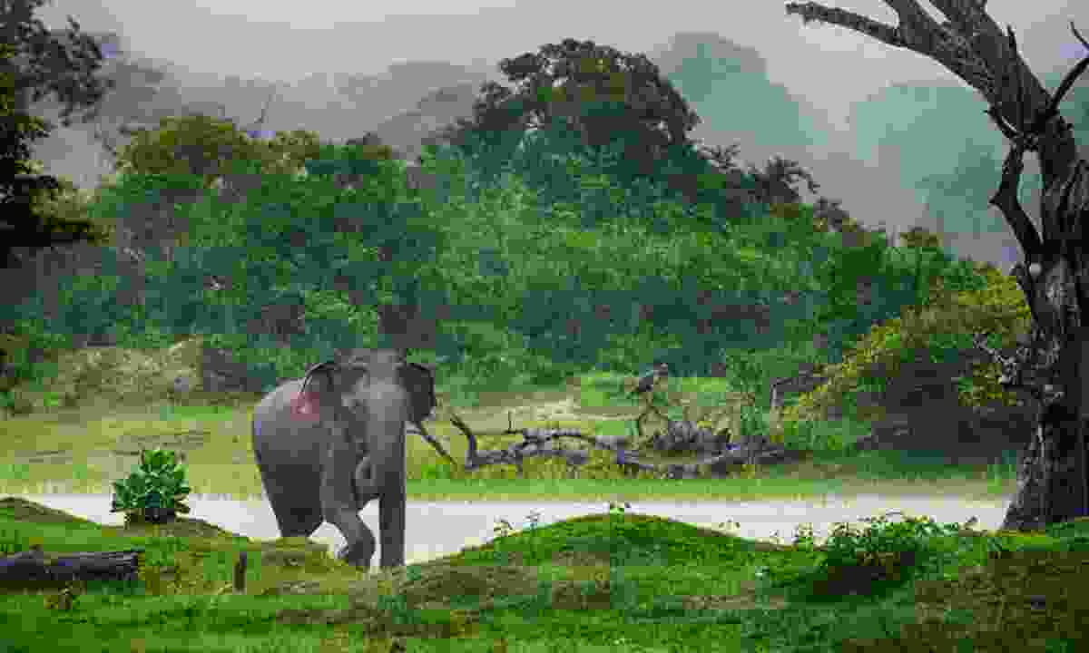 Elephant in the wilds of Sri Lanka (Shutterstock)