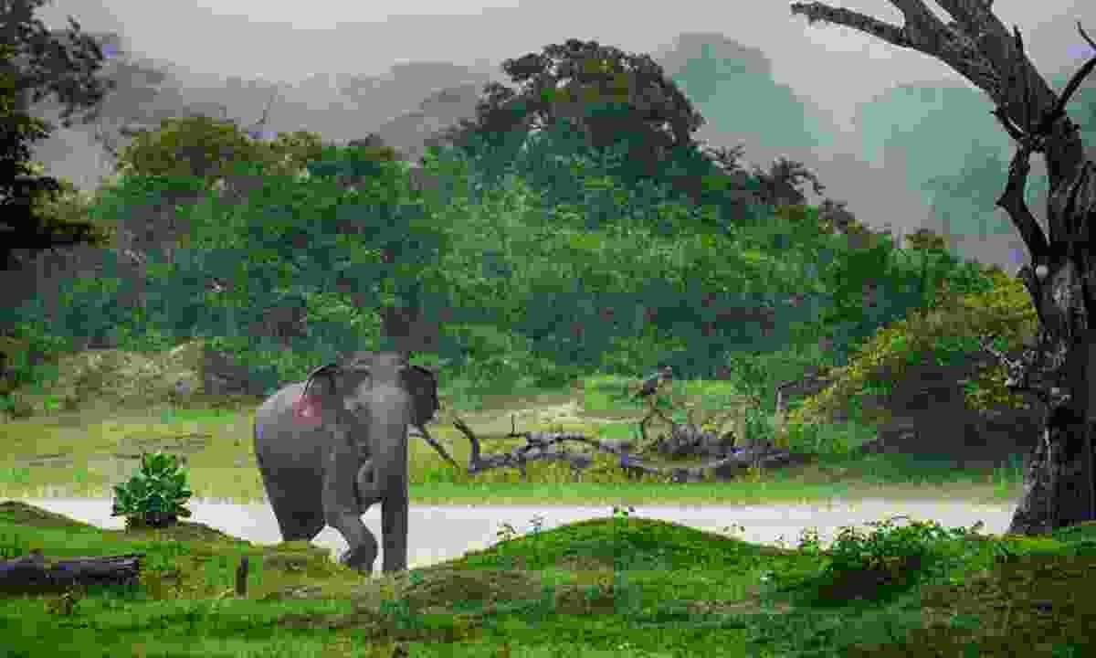 Elephant in the wilds of Sri Lanka (Shutterstock)