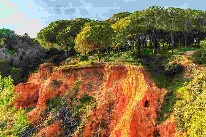 Parque Naturale da Ria Formosa (Shutterstock)