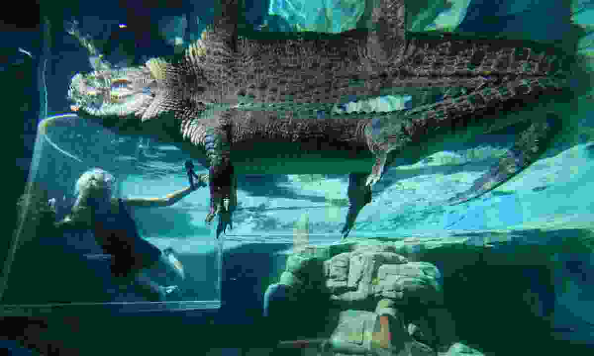 Phoebe and one of the crocs (Crocosaurus Cove)