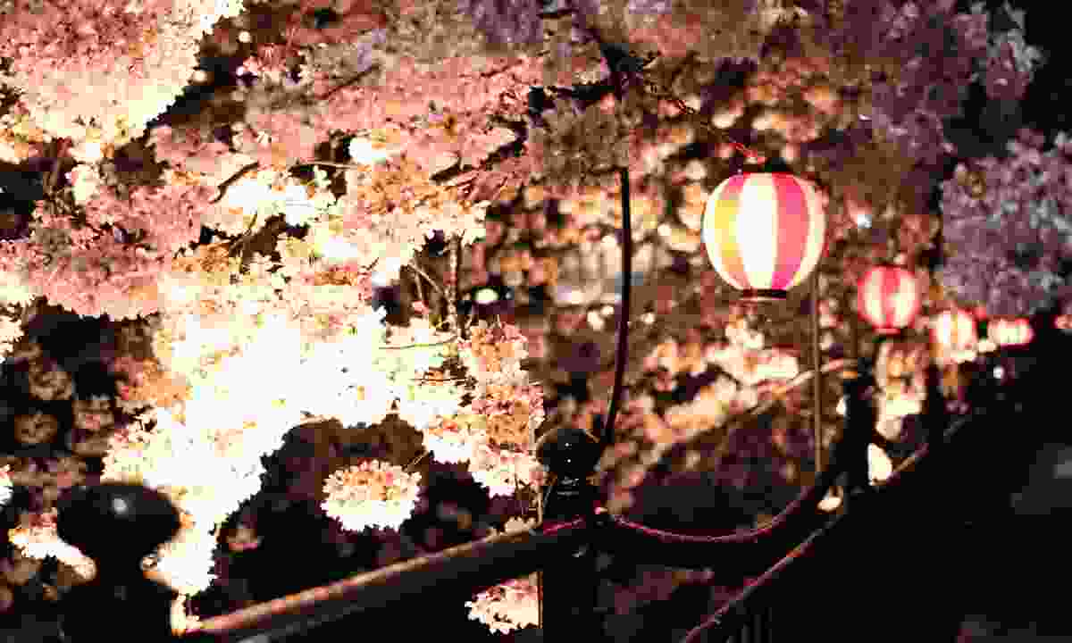 Lantern-lit cherry blossom (Shutterstock)