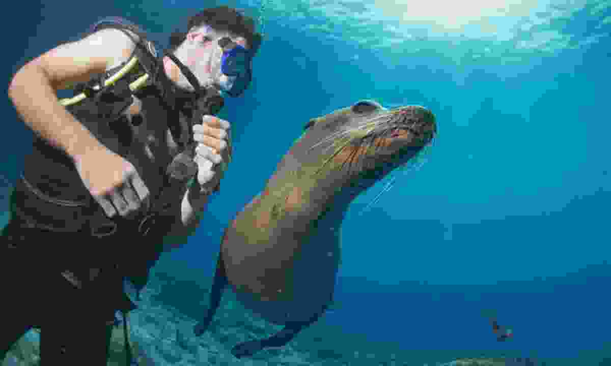 Swim with sea lions in the Galápagos Islands (Shutterstock)