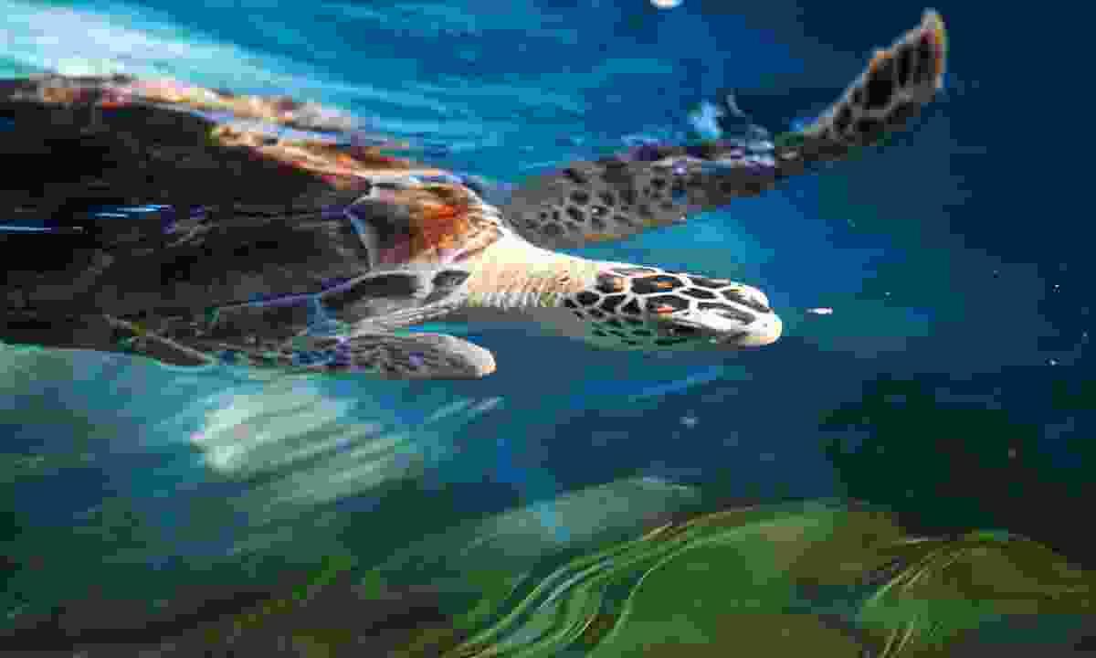 Ocean turtle (Shutterstock)